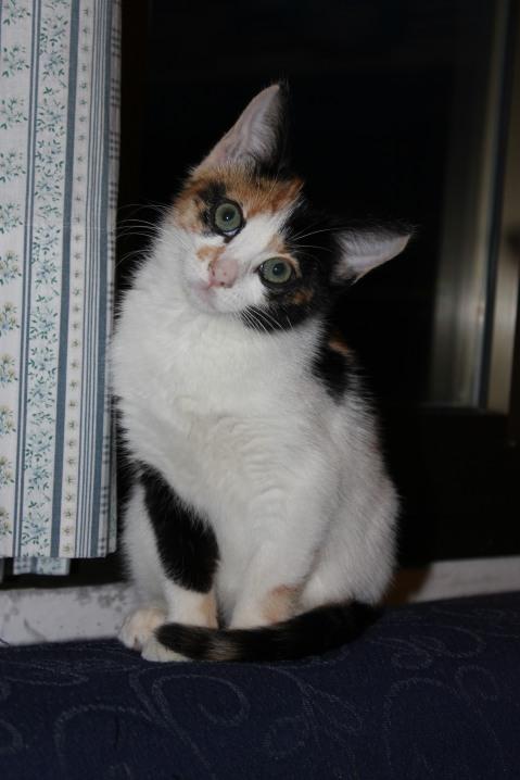 Bri interpreta Micetta, la gatta tricolore amica del protagonista